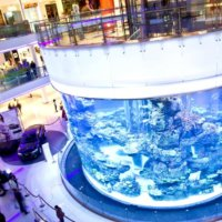 Aquadream – Morocco Mall Aquarium