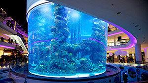 Aquadream – Morocco Mall Aquarium
